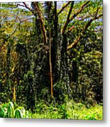 Oahu Rainforest Metal Print