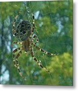 Orb Spider      Summer           Indiana Metal Print