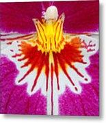 Orchid Closeup Metal Print