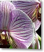Orchid Flower Metal Print