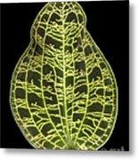 Orchid Leaf Metal Print