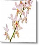 Orchid Panicle Metal Print