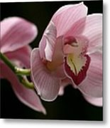 Orchid's  Mystery Metal Print by Valia Bradshaw