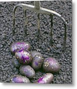 Organic Potatoes Metal Print