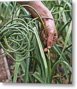Organic Serpent Garlic Metal Print
