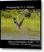 Osprey With Rainbow Trout Metal Print