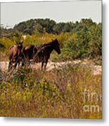 Outer Banks Horses Metal Print