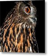 Side Portrait Of An Eagle Owl Metal Print