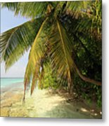 Palm Trees Growing On Tropical Beach Metal Print