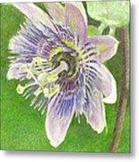 Passiflora Alatocaerulea Metal Print by Steve Asbell