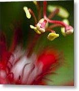 Passiflora Flower Metal Print by Zoe Ferrie