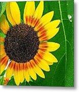Peeping Sunflower Metal Print