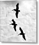 Pelicans On The Wing Metal Print