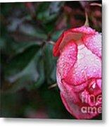 Peppermint Rose Metal Print