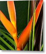 Photograph Of A Parrot Flower Heliconia Metal Print
