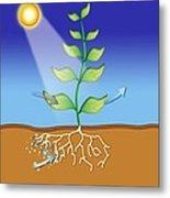 Photosynthesis, Artwork Metal Print by David Nicholls