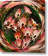 Pink African Daisies Metal Print