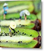 Planting Rice On Kiwifruit Metal Print