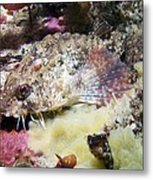 Poacher Fish Metal Print