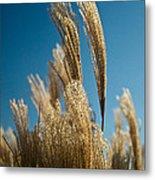 Pompas Grass 1 Metal Print