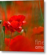 Poppy Flowers 02 Metal Print