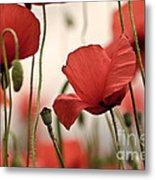 Poppy Flowers 04 Metal Print