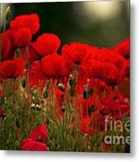 Poppy Flowers 05 Metal Print
