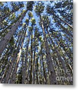Power In Pines Metal Print