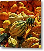 Pumpkins And Gourds Metal Print by Elena Elisseeva