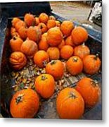 Pumpkins In The Back Metal Print