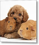Puppy And Guinea Pigs Metal Print