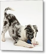 Puppy Playing With A Ball Metal Print