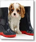 Puppy With Rain Boots Metal Print