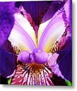 Purple Iris Macro Metal Print