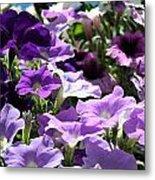 Purple Petunias Metal Print
