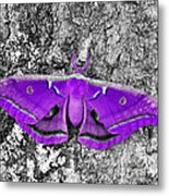 Purple Polyphemus Metal Print