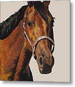 Quarter Horse Metal Print by Ann Marie Chaffin