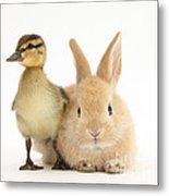 Rabbit And Duckling Metal Print