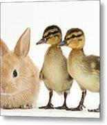 Rabbit And Ducklings Metal Print