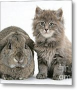 Rabbit And Kitten Metal Print