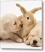 Rabbit And Puppies Metal Print