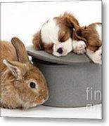 Rabbit And Spaniel Pups Metal Print