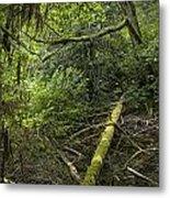 Rain Forest On Vancouver Island Metal Print