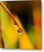 Raindrop On Strelitzia Reginae Metal Print