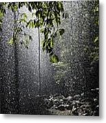 Rainforest, Bellingen, Australia Metal Print