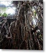 Rainforest Tree Metal Print