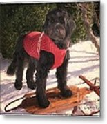 Ready To Sled Metal Print
