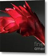 Red Ginger Alpinia Purpurata Flower Metal Print
