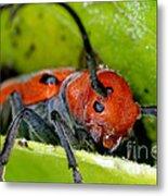 Red Milkweed Beetle Metal Print