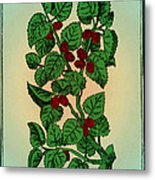 Red Mulberry Metal Print